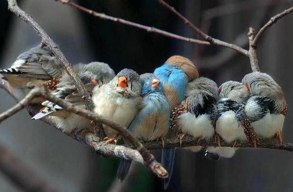 Animales durmiendo