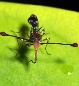 estaciones moscas