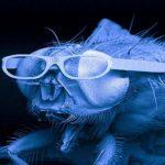 gafas de mosca