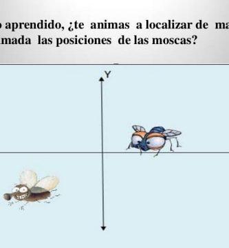 moscas cartesianas