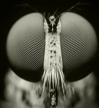 como ven las moscas