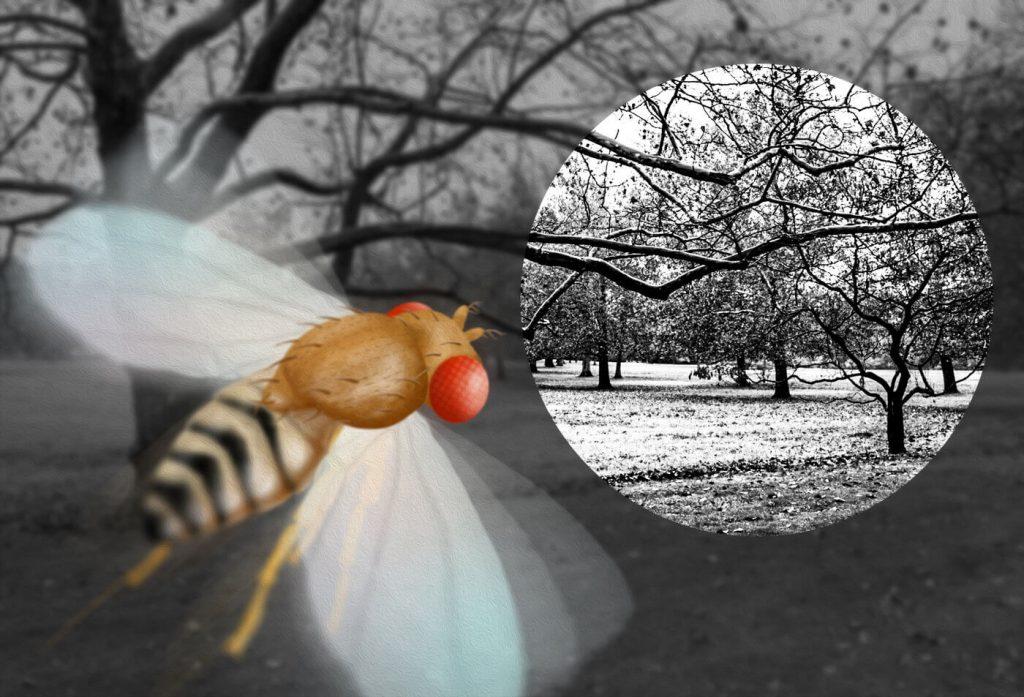 moscas daltonicas